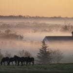 Lexington: Horse capital of the world and birthplace of bourbon