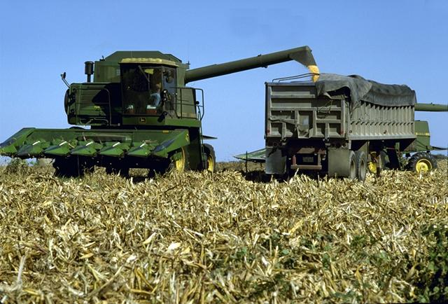 Corn is the main feedstock used for producing ethanol fuel in the United States. (Photo courtesy USDA)