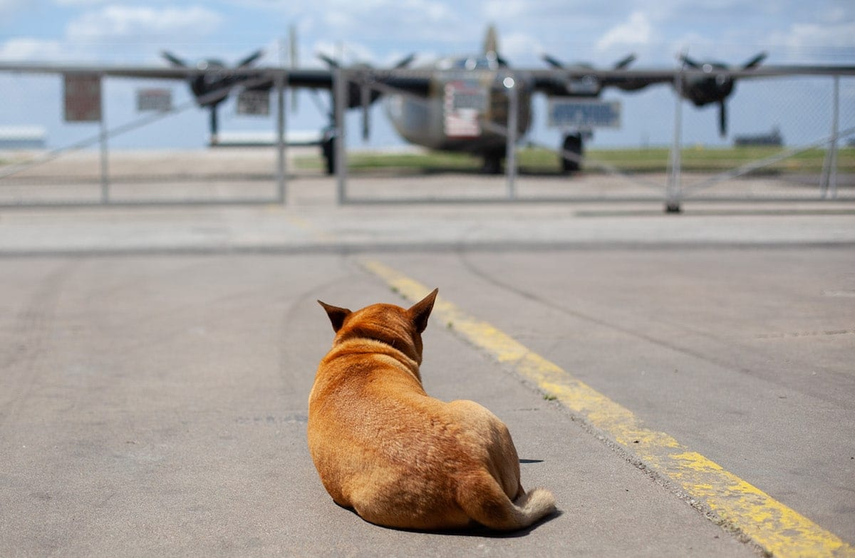 Picture of the Day: Keeping watch